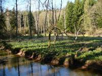 Údolí Jíveckého potoka - bledulová pole, Pavla Gürtlerová, 2004