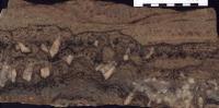 Lom v Podlesí - detail textury žilného granitu, usměrněná krystalizace granitové taveniny (shora dolů) je vyjádřena střídáním cm-mm vrstviček s různým poměrem křemene, albitu a K-živce (světlé vrstvy) a zinnwalditu (tmavé vrstvy). Velké krystaly ortoklasu rostly ze silně podchlazené taveniny směrem kolmo od kontaktu, měřítko je v cm, Karel Breiter, 2003