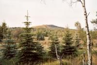 Velký Špičák - zbytek přívodní dráhy neovulkanitu, Markéta Vajskebrová, 2003