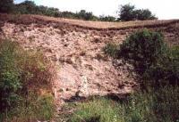 Přemysl Zelenka, 1995