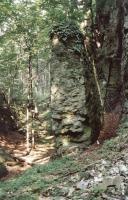 Vysoký kámen u Stárkova - turonské slínovce, Pavla Gürtlerová, 2003