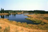 Volárenský rybník na severním okraji rašeliniště, Markéta Vajskebrová, 2003