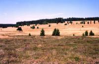 Část vrchovištního rašeliniště, které bylo v minulosti vytěženo, Markéta Vajskebrová, 2005