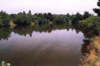 Dřevařský rybník - uměle založená nádrž na vrcholovém hřbetu Krušných hor, sycena pouze podzemními prameny, Markéta Vajskebrová, 2003