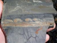 Skluzové struktury v sedimentu z lomu Jezírko u Dobříše., Pavel Bokr, 2004