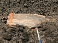 Fragmenty hornin z podloží (fylity chebsko-dyleňského krystalinika), Bedřich Mlčoch, 2007