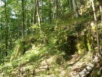 Odkryv erlanu ve svahu nad Hazlovským potokem, Pavla Gürtlerová, 2007