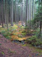 Kaňonovitá údolí odvodňují potoky na jejichž dně lze nalézt tzv. zderazskou žulu (načervenalý muskoviticko - biotitický granit) , Pavla Gürtlerová, 2007