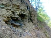 Detail na rozpadající se šárecké břidlice vycházející po celé délce jižního svahu cihelny., Jakub Březina, 2008