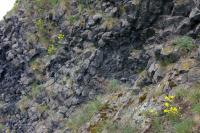Lysá skála - nejvyšší čedičový suk z Provodínských kamenů. Pohled od jihu., Ondřej Svačinka, 2008