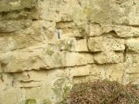 masivně lavicovité středně zrnité vápnité pískovce s hojnými ichnofosiliemi, Tomáš Kumpan, 2005