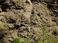 Hrubozrnná vulkanoklastika na výchozech při silnici Děčín - Benešov nad Ploučnicí (pyroklastika bazaltoidních (príp. trachybazaltických) hornin), Pavla Gürtlerová, 2009