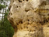Selektivní zvětrávání v pískovcích středního turonu.Vrstva hrubozrnějších pískovců podléhá snáze erozním vlivům a vytváří ve skále převisy, kapsy a dutiny., Pavla Gürtlerová, 2009