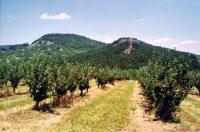 Pohled na selektivní erozí obnaženou žílu Kuzov. V pozadí Blešenský vrch., Vladislav Rapprich, 2002