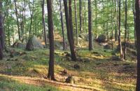 Sesuvné akumulace pod skalním defilé na Jedlce., Vladislav Rapprich, 2002