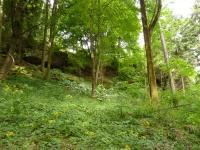 Skalní sruby v s. úbočí vrchu Výrovec (686 m), zarostlá vyústění pseudokrasové jeskyně. , Pavla Gürtlerová, 2010