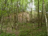 Zbytky haldy v severní části dobývek, Pavla Gürtlerová, 2010