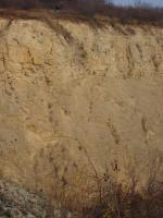 V nadloží jurské sedimenty (střední oxford)– převážně vápence – nasedající s úhlovou diskordancí na zvrásněné hádsko-říčské vápence líšeňského souvrství (svrchní devon). , Eva Jarolímová, 2006