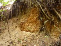 Silně písčitý hrubozrnný fluviální štěrk, v horní části profilu přechází do hrubozrnného písku, tvořícího vzájemně se seřezávající duny s šikmým zvrstvením. Zcela v horní části profilu je dvoumetrová poloha jemnozrnného masivního písku., Pavla Gürtlerová, 2009