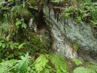 Výchoz dokumentace Olešnicko-uhřínovského přesmyku v údolí Huťského potoka. Profil podle silnice na Velký Uhřínov., Pavla Gürtlerová, 2011