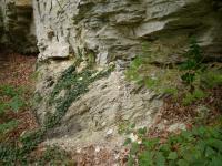 Skály v zámeckém parku. Transgresivní uložení křídových sedimentů přes proterozoické fylity. Úhlová diskordance., Pavla Gürtlerová, 2011