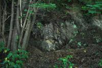 Ve střední části sklaních odkryvů na Landeku vystupuje skupina faunistických horizontů Nanety. Místy se v jílovcích objevují oválné, až několik decimetrů velké světlé bochníky pelosideritů., Jan Malík, 2011