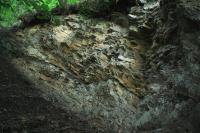 Odkryv po vývratu stromu odkrývá tenkou slojku černého uhlí, která je v levé části fotografie přerušena zlomem., Jan Malík, 2011