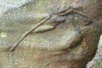Skalní výchoz v lukovských vrstvách- proudové lineace a fosilní stopy na spodní vrstevní ploše, Roman Novotný, 2011