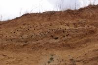 Profil ve steně štěrkovny, svrchní partie 1,5 mocný patrně deluvioeolický písek, v němž hnízdí vlhy a břehule., Pavla Gürtlerová, 2012