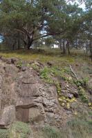 Výchozy serpentinitů u silnice jižně od Mohelna nad údolím Jihlavy., Pavla Gürtlerová, 2012
