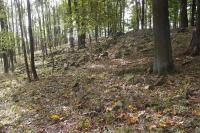 Suťová pole na svazích hřbetu Hrádky kóta 628 m., Pavla Gürtlerová, 2012