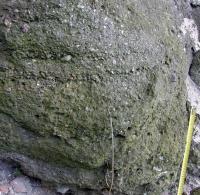 Petromiktní miroslavské slepence (jemnozrnné slepence s podpůrnou strukturou klastů, nevýrazně subhorizontálně zvrstvené), Tomáš Kumpan, 2014