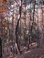 Fenomén opilého lesa dokládající sesuvné pohyby., Jan Doucek, 2011