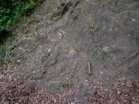 Transgrese kambria v údolí Berounky při silnici z Týřovic do Roztok. V levé horní části snímku jsou patrné šikmé vrstvy kambria, v pravo neoproterozoikum., Pavel Bokr, 2015