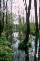 Meandry v různém stupni aktuálního vývoje uprostřed rozsáhlého komplexu zaplavovaných lužních lesů., Motyčková Kamila - Šír Jiří, 2015