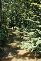 Meandry v různém stupni aktuálního vývoje uprostřed rozsáhlého komplexu zaplavovaných lužních lesů., Motyčková Kamila - Šír Jiří, 2009