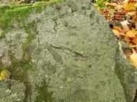 Blok granitu s tmavými uzavřeninami taveniny jiného chemického složení (xenolity)., Fotoarchiv Národního geoparku Železné hory, 2010