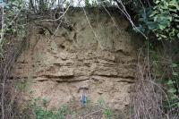 Kvartérní sedimenty (spraše, naváté písky)., Pavla Tomanová Petrová, 2016