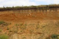 Fluviální písky a štěrky v podloží černozemě a spraší, pozorovatelné záteky CaCO3 ze spraší do fluviálních písků a štěrků., Pavla Tomanová Petrová, 2016