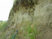 Prachy a jemnozrnné písky bzeneckého souvrství (pannon D-E)., Pavla Tomanová Petrová, 2009