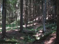 Zbytky po těžbě železné rudy v údolí Vošmendy., Markéta Vajskebrová, 2016