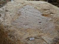 Ledovcový ohlaz a exarační rýhy na povrchu balvanu nordického granitu v odkryvu na Písečníku. , Martin Hanáček, 2013