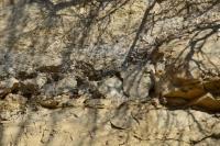 Ve spodní části lomu se objevují tlustě deskovité masivní, silně vápnité pískovce, výše následují méně vápnité, tence ploše úlomkovitě rozpadavé pískovce s konkrecemi i polohami tvrdých vápenců, selektivně vyvětrávajících., Motyčková Kamila - Šír Jiří, 2015