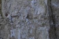 Několik profilů křídových křemenných kvádrových pískovců a vápnitých pískovců svrchního cenomanu s četnými zkamenělinami ústřic, rudistů, zub žraloků a kostnatých ryb., Motyčková Kamila - Šír Jiří, 2015