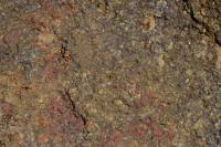 Mořské uloženiny kambria a spodního ordoviku., Markéta Vajskebrová, 2014