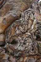 Skalní hřbet tvořený křídovými křemennými pískovci jizerského souvrství stáří turonu prosycený železitými sloučeninami s ukázkami selektivního zvětrávání., Motyčková Kamila - Šír Jiří, 2009