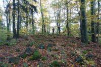 Na vrcholu Plešného a v jeho blízkém okolí se nachází množství rozptýlených balvanů nefelinického bazanitu s olivínickými peckami - shluky krystalů olivínu., Pavla Gürtlerová, 2017