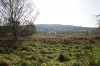 Rašeliniště (ostřico-mechová slatina) na soutoku Liščího a Vilémovského potoka. Pohled od Vilémova, Pavla Gürtlerová, 2017