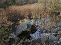 Opuštěný stěnový lom v lužickém granodioritu s doleritovou žílou, Markéta Vajskebrová, 2017