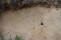 Tektonicky postižené písky a štěrky karpatu v pískovně v Litenčicích., Pavla Tomanová Petrová, 2018
